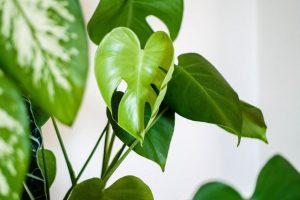¡Cómo usar los alimentos vegetales Ecoscraps en 5 métodos increíbles!