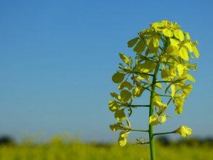 ¿Cómo mezclar fertilizante? ¡Esta es la forma correcta de hacerlo!