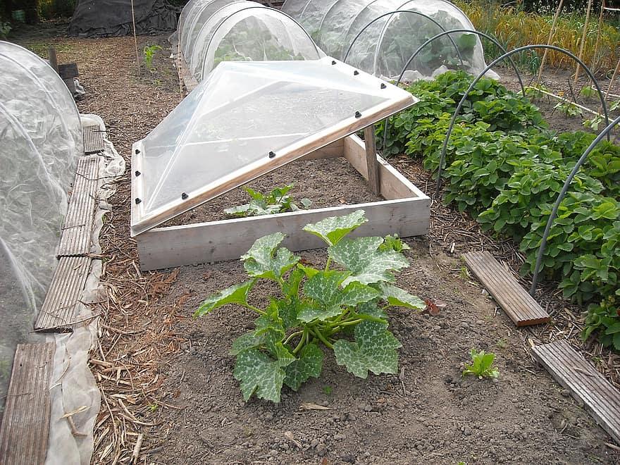 ¿Qué se puede plantar en un mini túnel de polietileno?