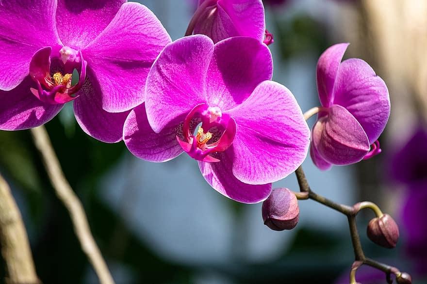 Cómo conseguir varios tallos en una orquídea