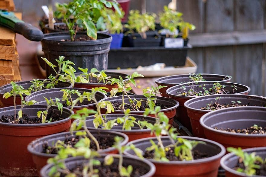 Lo que ayuda a que las plantas de Polytunnel se mantengan pequeñas