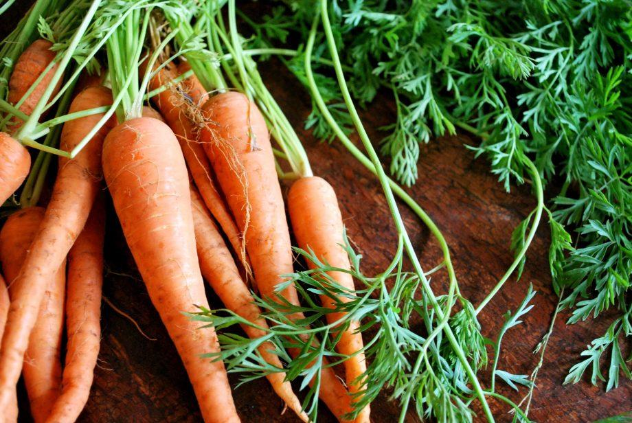Los fundamentos del cultivo de zanahorias en Italia