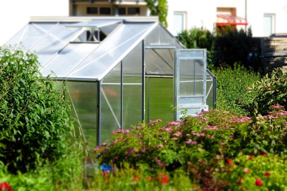Qué cultivar en un pequeño túnel de polietileno