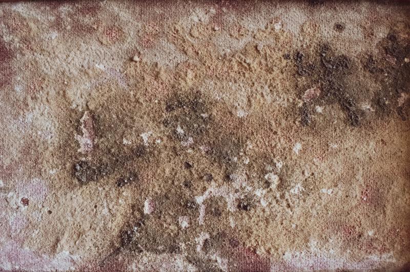 ¿El moho muere cuando se seca? Una guía informativa para el hogar